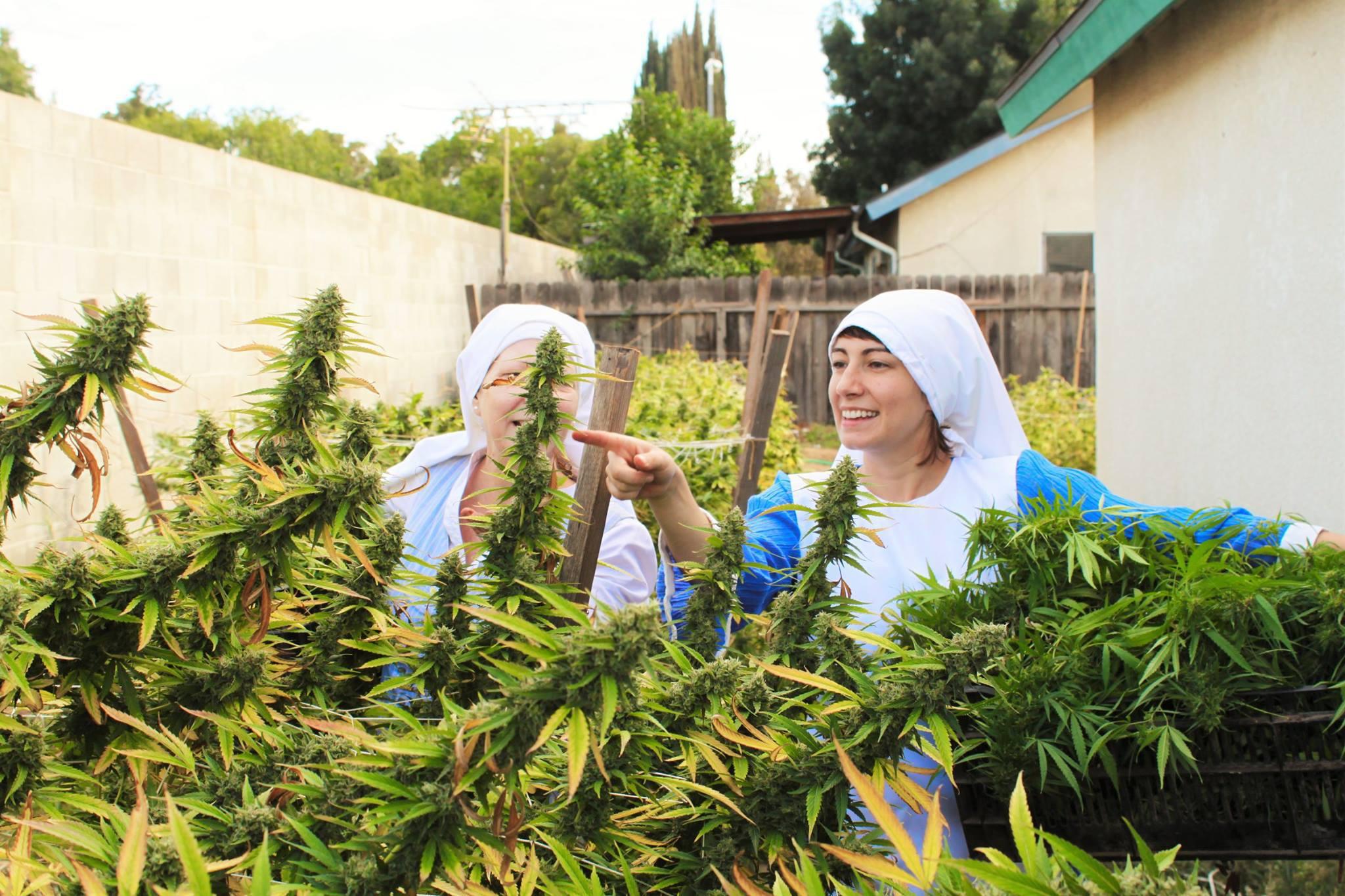 Freiras Californianas Cultivam Maconha