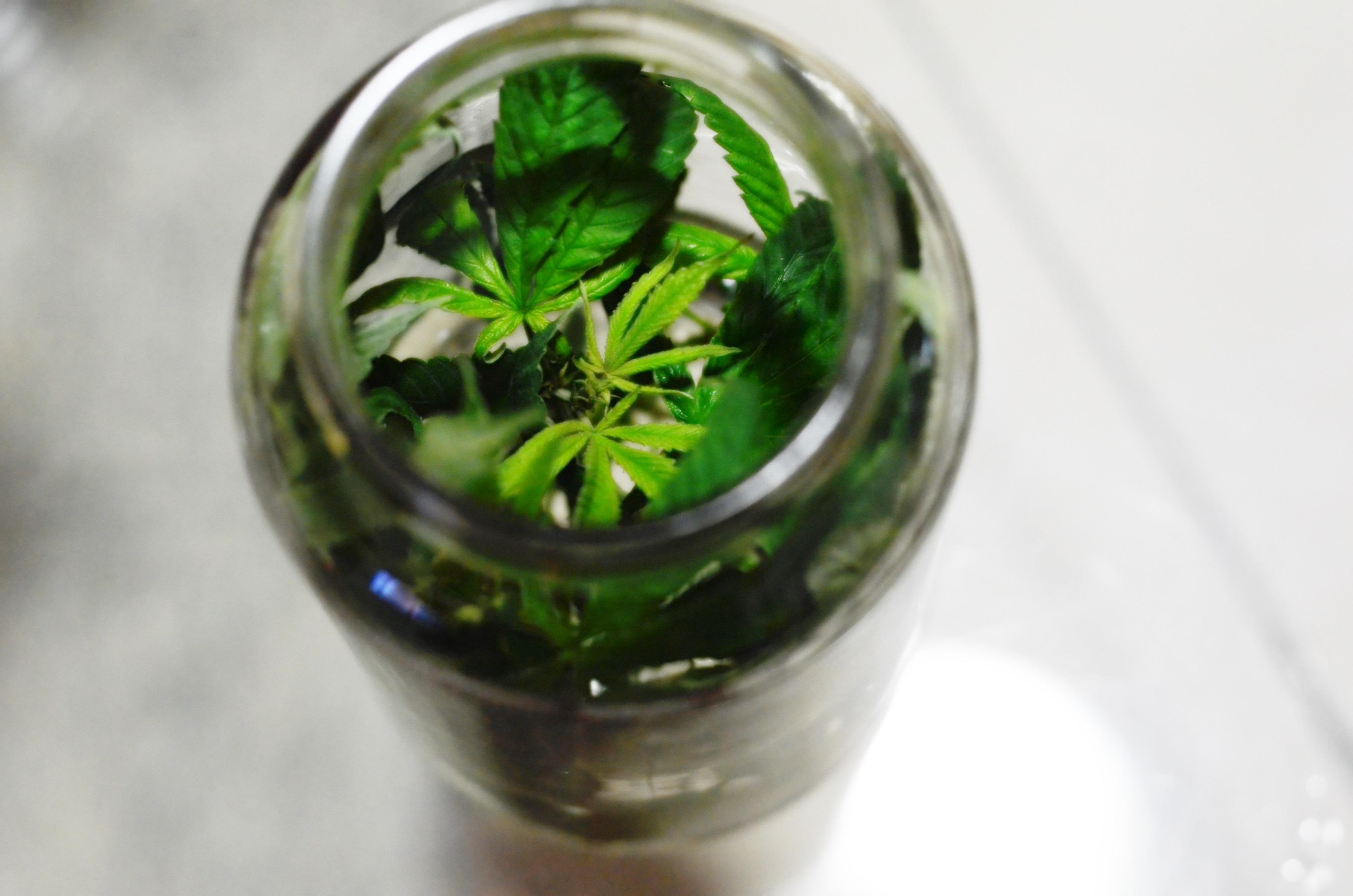 Mudança Na Política De Drogas